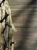 Wood and Rusty Nails. In sunshine royalty free stock photo