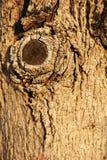 Wood sömlös modell Royaltyfri Foto