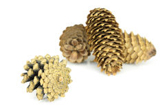 Wood's pine cones Stock Images