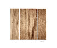 Wood sample of Willow wood,Ramin, Oak-red and Oak quartered Royalty Free Stock Images