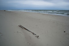 Wood at the sand beach. View to Baltic sea from the curonian spit, Russia stock images