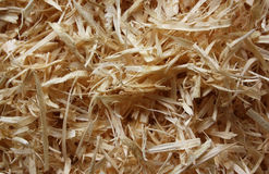 The wood sawdust. The natural wood sawdust of average size received by processing of wood Royalty Free Stock Images