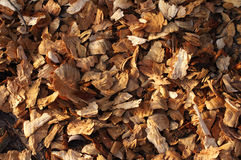 Wood sawdust close up. Abstract background. Stock Photography