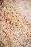 Wood Sawdust Macro Texture Background Stock Photos
