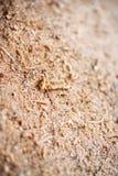 Wood Sawdust Macro Texture Background Stock Photos