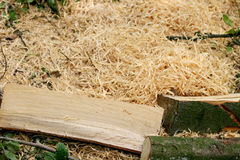 Wood and sawdust Stock Photo