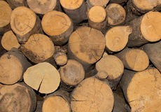 Wood sawed logs natural pattern Stock Photography