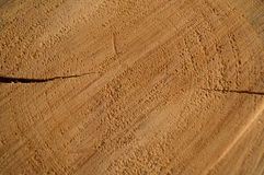 Wood. A sawn piece of wood Royalty Free Stock Images