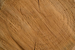 Wood. A sawn piece of wood Royalty Free Stock Photos