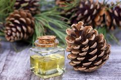 Wood scents for winter time aromatherapy. Pine cones and fresh green fir tree boughs, essential oil bottles, top view.  royalty free stock photos