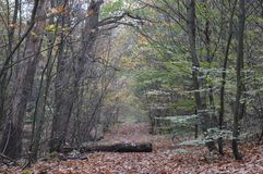 Wood. Scholes wood autumn royalty free stock photos