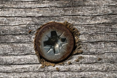 Wood screw. Old wood screw close up Royalty Free Stock Photo