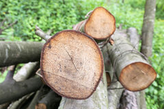 Wood Stock Images