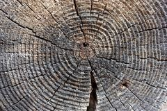 Wood in section texture, ancient stump close-up, cross section of the tree, cut the old log, brown dark old tree, textured wooden stock photos
