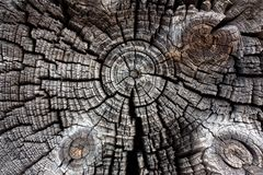 Wood in section texture, ancient stump close-up, cross section of the tree, cut the old log, brown dark old tree, textured wooden stock image