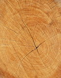 Wood section texture Stock Photo