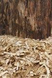 Wood Shavings Arkivbild
