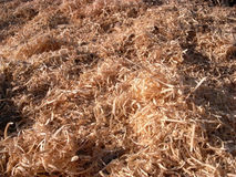 Wood shavings. Newly cut wood shavings in sunshine Stock Photo
