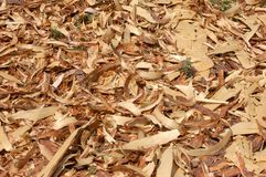 Wood shavings. Land is coated with film of wood shavings, wood industry Royalty Free Stock Image