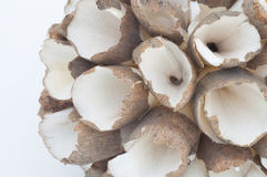 Wood Shavings Design Royalty Free Stock Image