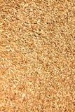 Wood shavings on the floor Royalty Free Stock Image