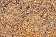 Wood shavings texture Stock Photography