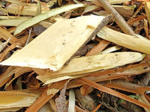 Wood shavings texture Stock Image