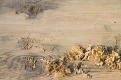 Wood shavings on a wooden background blurred Stock Photo