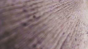 Wood sheet Royalty Free Stock Photography