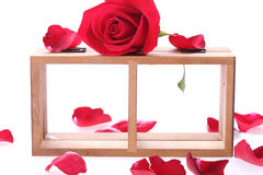 Wood shelf decorated with red rose flowers. On white background royalty free stock image