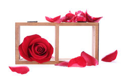 Wood shelf decorated with red rose flowers. On white background stock image