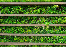 Wood shelf with green leaves. Background stock photo