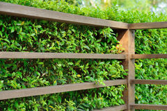 Wood shelf with green leaves background Stock Image