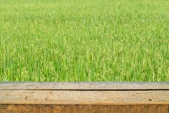 wood shelf and green rice field background stock photography