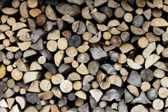 Wood shock in the forest stock photography