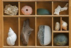 Wood Showcase with Seashells Stock Photo
