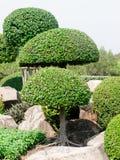 Wood shrubs. Beautiful wood shrubs in garden Stock Photos