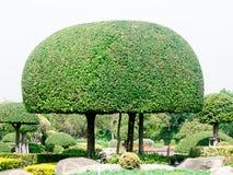 Wood shrubs. Beautiful wood shrubs in garden Royalty Free Stock Photos