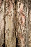 Wood siding background Royalty Free Stock Photography