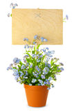 Wood Sign with Flowers / empty board for your text Stock Photo