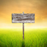 Wood sign with green rice field and Clouds  sunset in Thailand Stock Photography