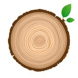 Wood sign icon cross section of the trunk with tree rings royalty free illustration