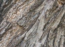 Wood skäll Royaltyfria Foton