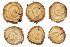Wood skiva arkivbild