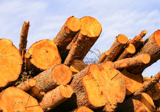 Wood and Sky Stock Images