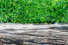 The wood slat on the green grass. Royalty Free Stock Photography