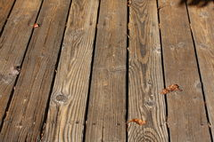 Wood slats of an outdoor deck. Weathered dark brown wooden slats forming a deck.  Knot holes and nails are in the wood Stock Images