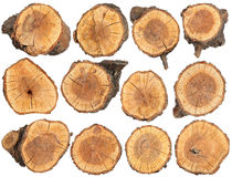 Wood slice texture Stock Images