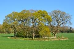 Wood småskog i lantliga England Arkivbilder