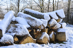 Wood with snow Stock Photography